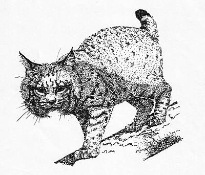 Drawing - Bobcat In A Shadow by Suzanne McKee