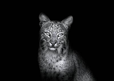 Beauty Mark Photograph - Bobcat In The Wild by Mark Andrew Thomas