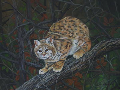 Bobcats Mixed Media - Bobcat by Joan Barnard