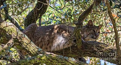 Bobcats Digital Art - Bobcat Living High by Bill And Deb Hayes