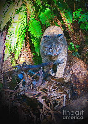 Photograph - Bobcat On The Hunt by Ansel Price