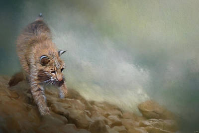 Painting - Bobcat On The Rocks by Jai Johnson