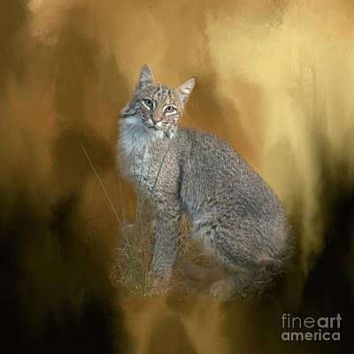 Photograph - Bobcat by Renee Trenholm