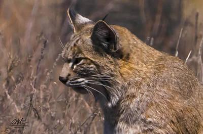 Bobcat Original by Richard Estrada