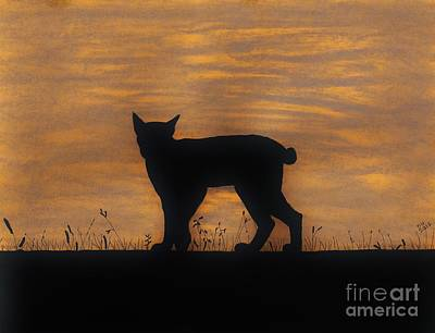 Drawing - Bobcat - Sunset by D Hackett