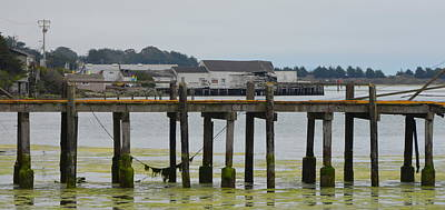 Photograph - Bodega Bay Dock Behind The Tides Restaurant by Carla Parris