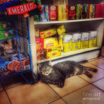 Photograph - Bodega Cat - At Home In New York by Miriam Danar