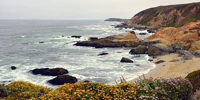 Photograph - Bodega Head Coastal Landscape by Carla Parris