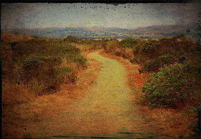 Photograph - Bodega Headlands Walkway by Carla Parris
