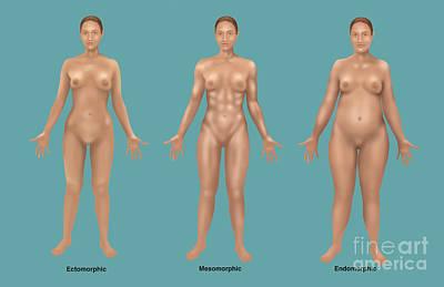 Body Types Print by Gwen Shockey