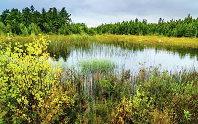 Photograph - Bog In Northern Michigan by Alexey Stiop