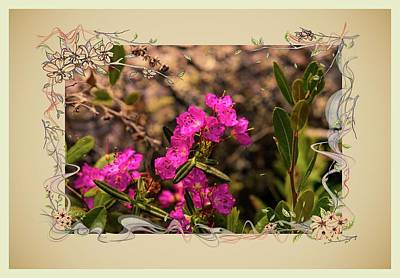 Photograph - Bog Laurel Flowers by Sherman Perry