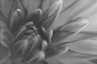 Photograph - Bohemain Rhapsody Monochrome by Teresa Wilson