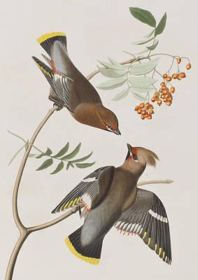 Fruit Tree Art Painting - Bohemian Chatterer by John James Audubon