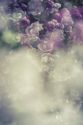 Photograph - Boho Chic Lilac Bouquet by Jenny Rainbow