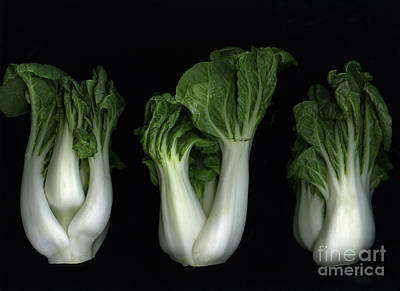 Slanec Photograph - Bok Choy by Christian Slanec