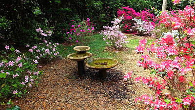Photograph - Bok Tower Gardens Hidden Fountain by Judy Wanamaker