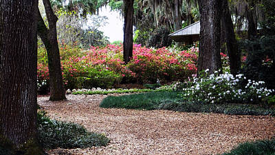 Photograph - Bok Tower Gardens Sanctuary Path by Judy Wanamaker
