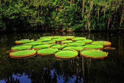 Photograph - Bok Tower Gardens Victoria Longwood Lily Pads  -  Boklily984 by Frank J Benz