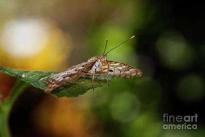 Photograph - Bokeh And Butterfly  by Ruth Jolly