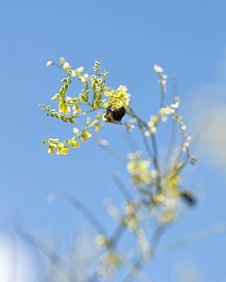 Photograph - Bokeh Bee by Nikki McInnes