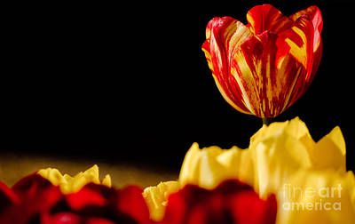 Compostion Photograph - Bold And Beautiful by Nick  Boren