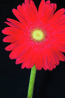 Photograph - Bold And Cheerful by Dawn Currie