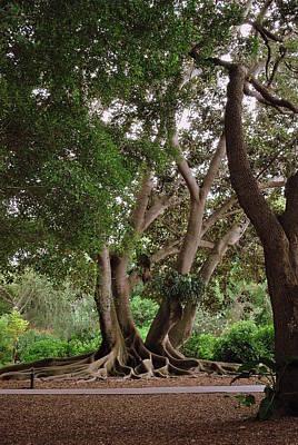 Photograph - Bold Branches by Amanda Vouglas