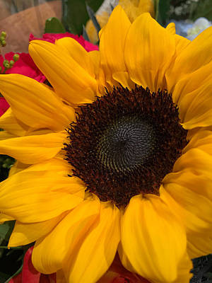Photograph - Bold Sunflower by Arlene Carmel