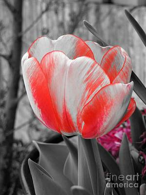 Photograph - Bold Tulip by Chad and Stacey Hall