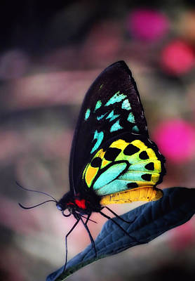 Photograph - Bold Wings Glow - Vertical - Butterfly by MTBobbins Photography