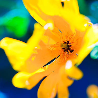 Photograph - Bold Yellow by Shuwen Wu