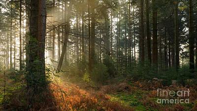 Bolderwood Morning I Art Print by Richard Thomas