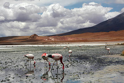 Photograph - Bolivian Landscape by Aidan Moran