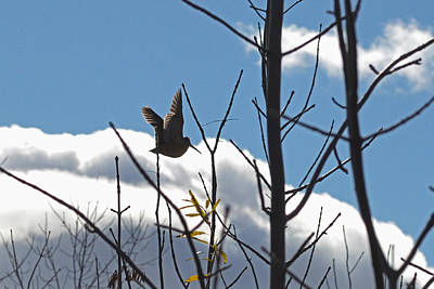 Woodcock Photograph - Bon Voyage Sky Dancer by Asbed Iskedjian