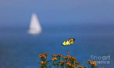 Photograph - Bon Voyage With Butterflies by Charline Xia