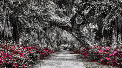 Green Cemetery Road Photograph - Bonaventure Cemetery Bw by Joan Carroll