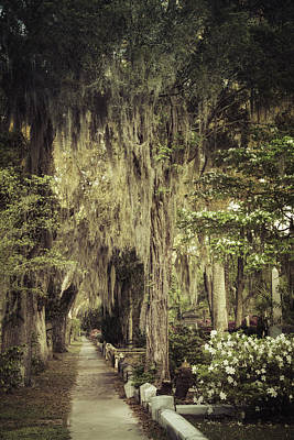 Green Cemetery Road Photograph - Bonaventure Cemetery Lane by Joan Carroll