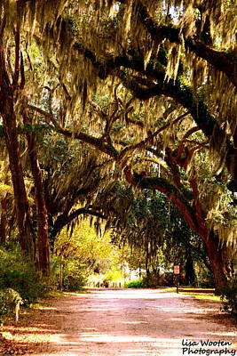 Photograph - Bonaventure Cemetery Mossy Oaks by Lisa Wooten