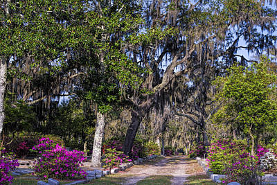 Green Cemetery Road Photograph - Bonaventure Cemetery Tracks by Joan Carroll
