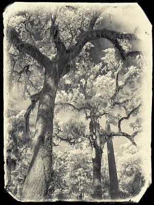 Savannah Infrared Photograph - Bonaventure Cemetery Trees Ir 1074 by Bob Neiman