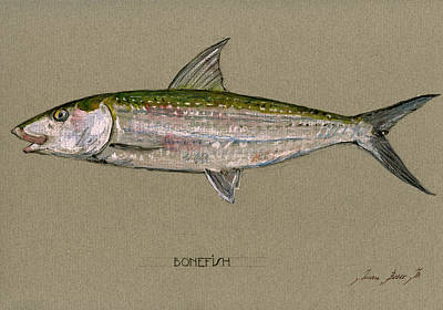 Bonefish Painting - Bonefish by Juan  Bosco