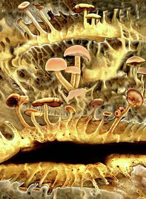 Bones And Mushrooms Original