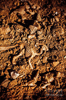 Bones From Ancient Times Art Print