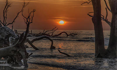 Photograph - Boneyard Beach by Jim Cook