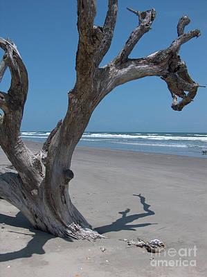 Photograph - Boneyard Beach by Kevin McCarthy