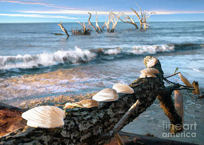 Photograph - Boneyard Shells IIi by Sharon Foster