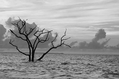 Photograph - Boneyard South Carolina by Randy J Heath