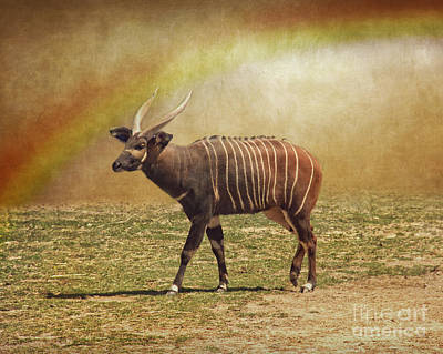Photograph - Bongo And The Rainbow by Dawn Gari