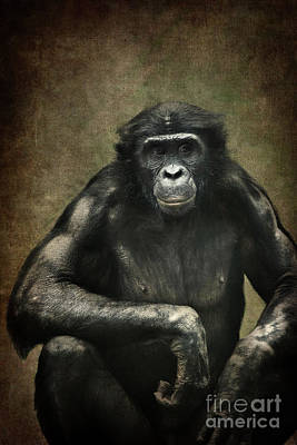Chimpanzee Mixed Media - Bonobo by Angela Doelling AD DESIGN Photo and PhotoArt